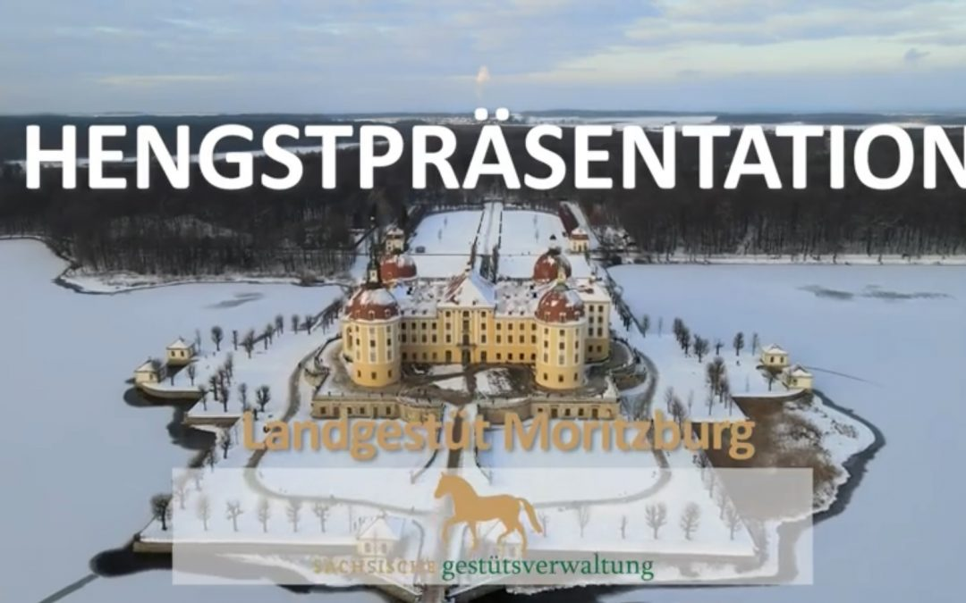 Hengstpräsentation des Landgestütes Moritzburg über ClipMyHorse.TV